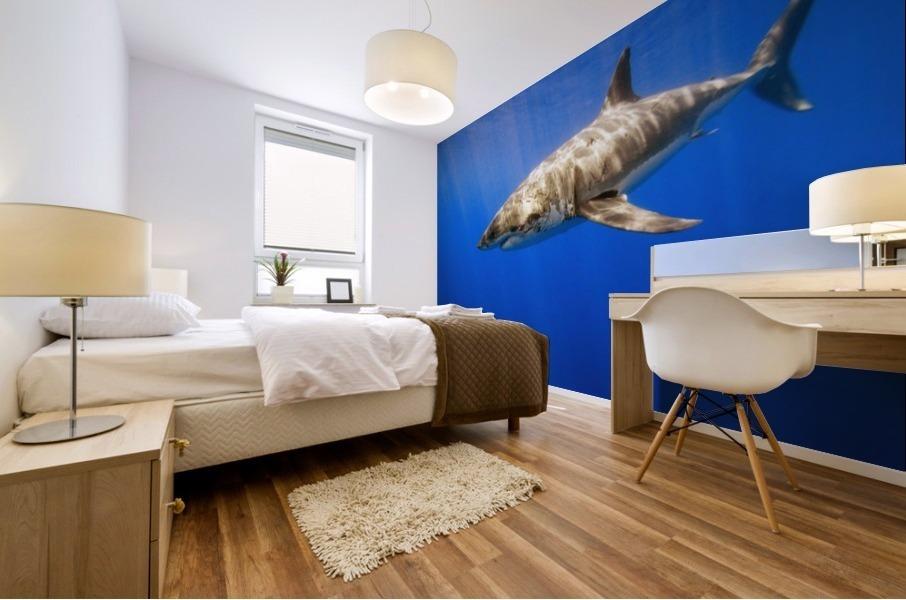 Great White Shark Mural print