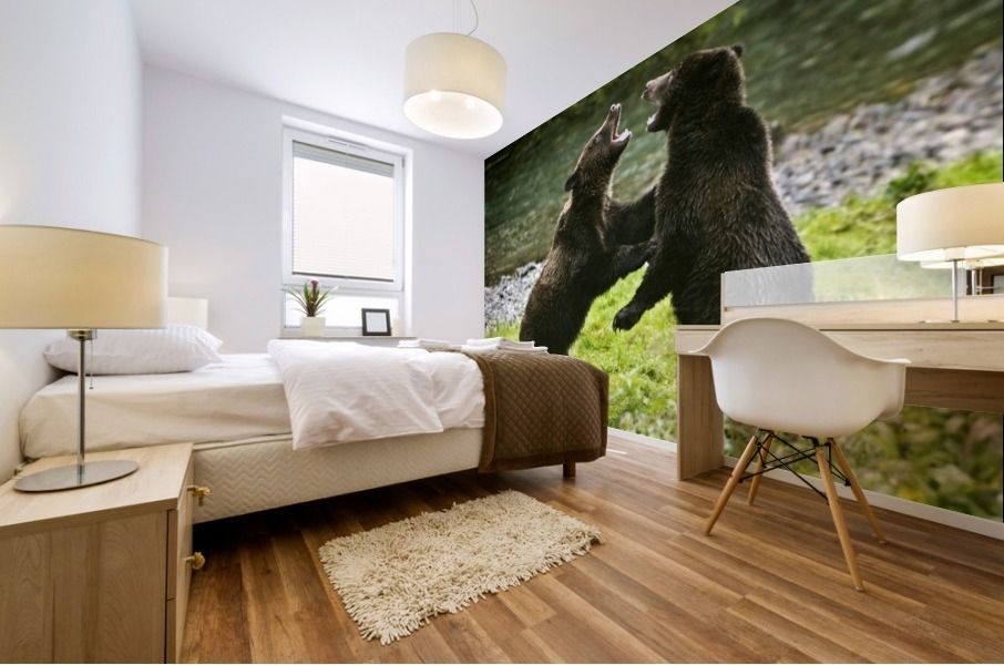 Two Grizzly Bears Fighting Mural print