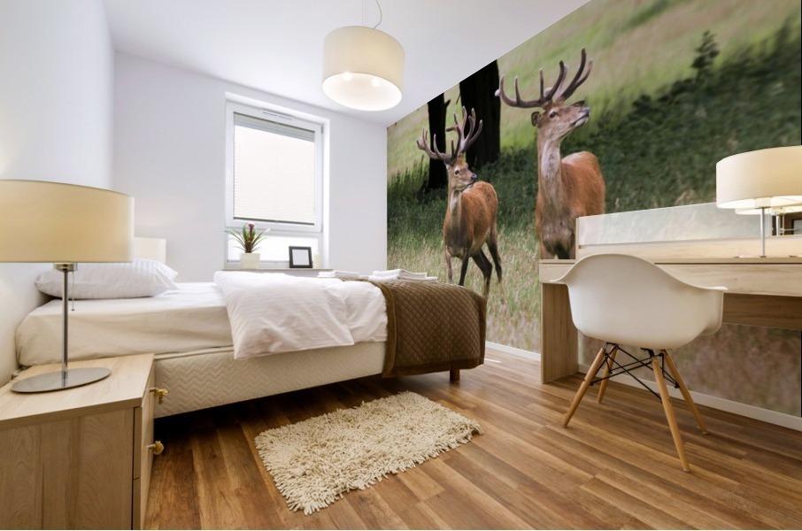 Elk In The Wild Mural print