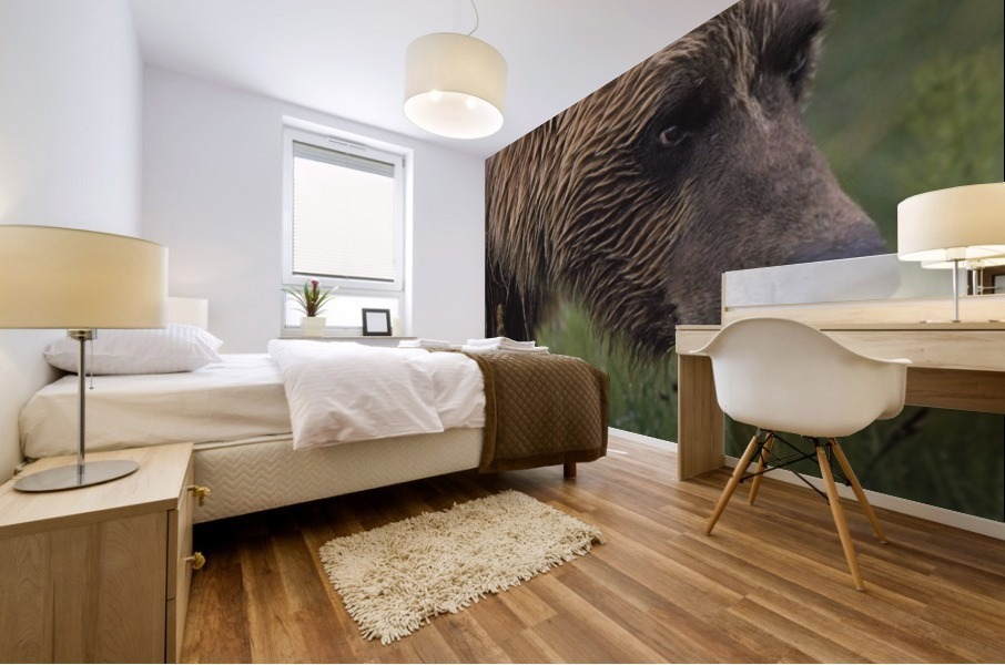 Grizzly Bear Wet From Rain Mural print