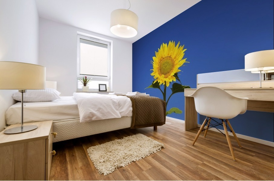Laval, Quebec, Canada; Sunflower (Helianthus Annuus) Against A Blue Sky Mural print