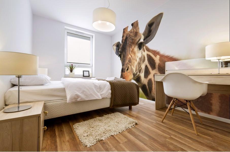 Buenos Aires, Argentina; Giraffe (Giraffa Camelopardalis) In Palermo Zoological Gardens Mural print