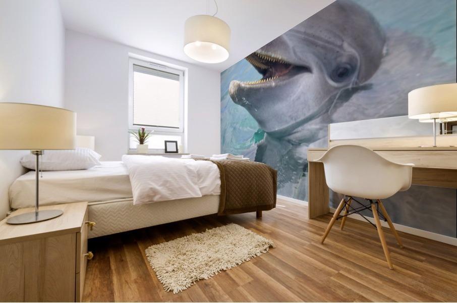 Roatan, Bay Islands, Honduras; A Bottlenose Dolphin (Tursiops Truncatus) In The Water At Anthony's Key Resort Mural print