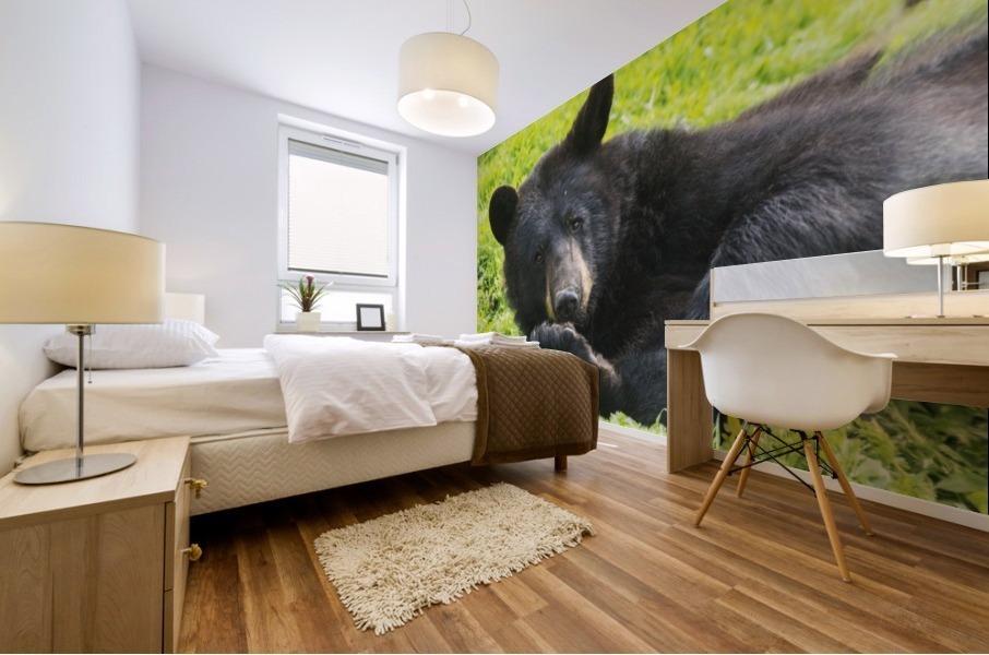 A black bear rolls around in the lush green grass Mural print