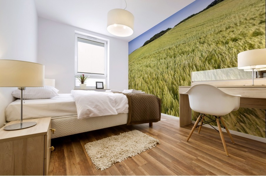 Wide angle image of a barley field with blue sky; Brittany, France Mural print