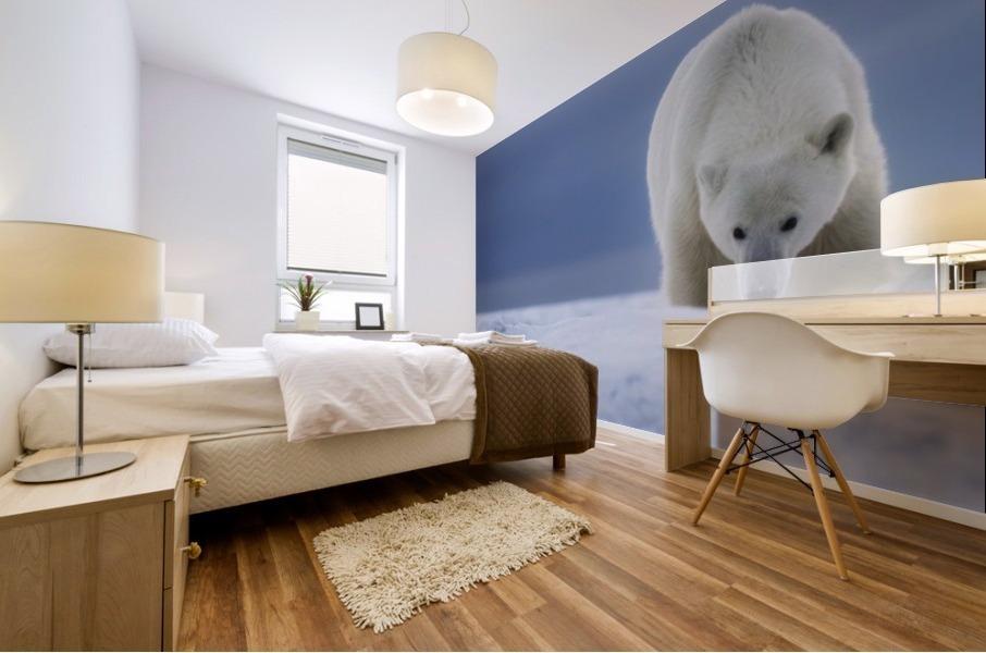 Polar bear (Ursus Maritimus); Churchill, Manitoba, Canada Mural print