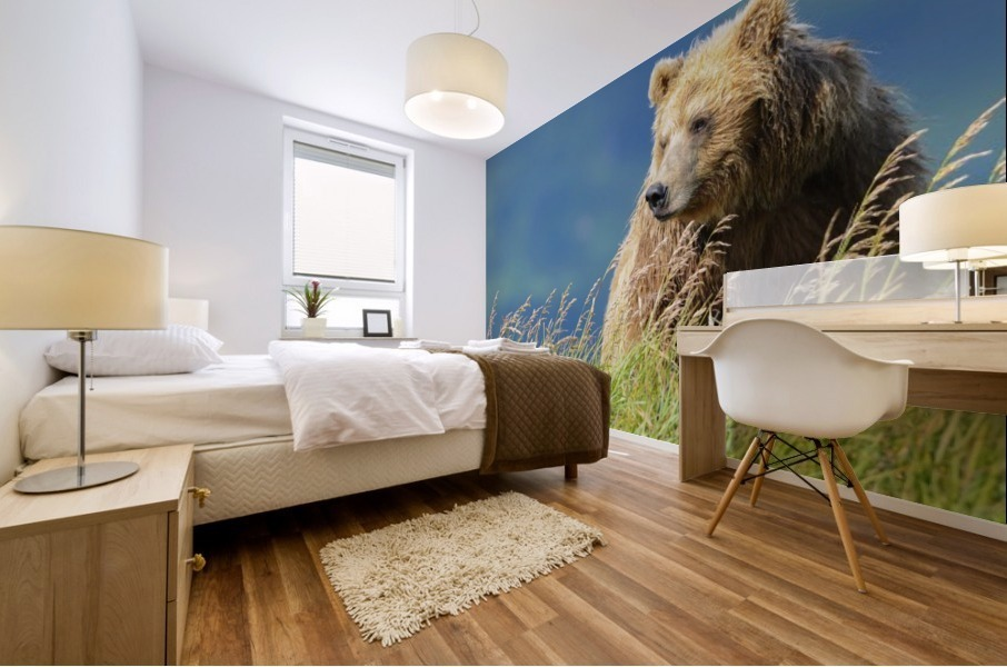 Portrait of a brown bear (portrait), Katmai National Park; Alaska, United States of America Mural print