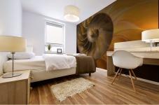 Inside Of Nautilus Shell Mural print