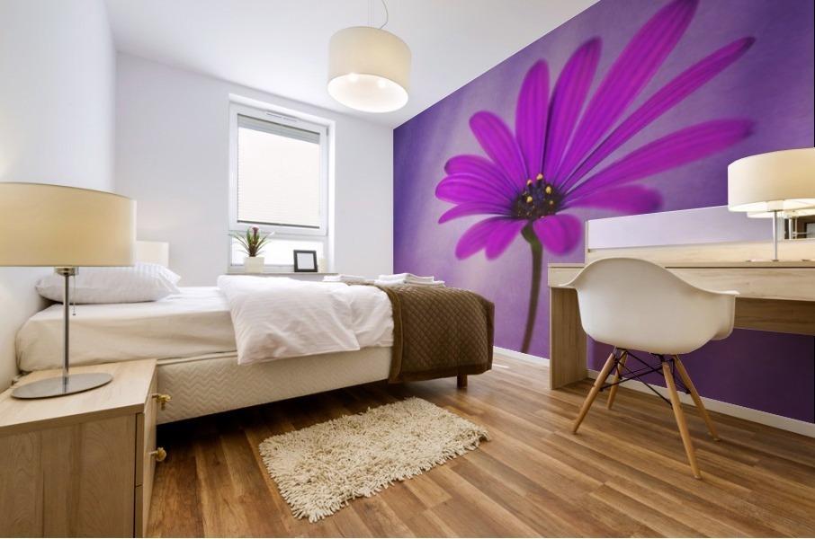 Purple Osteospermum Mural print