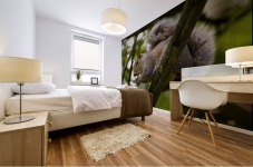 Gray Squirrel On A Tree Branch Mural print