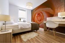 Orange Rose With Dew Mural print