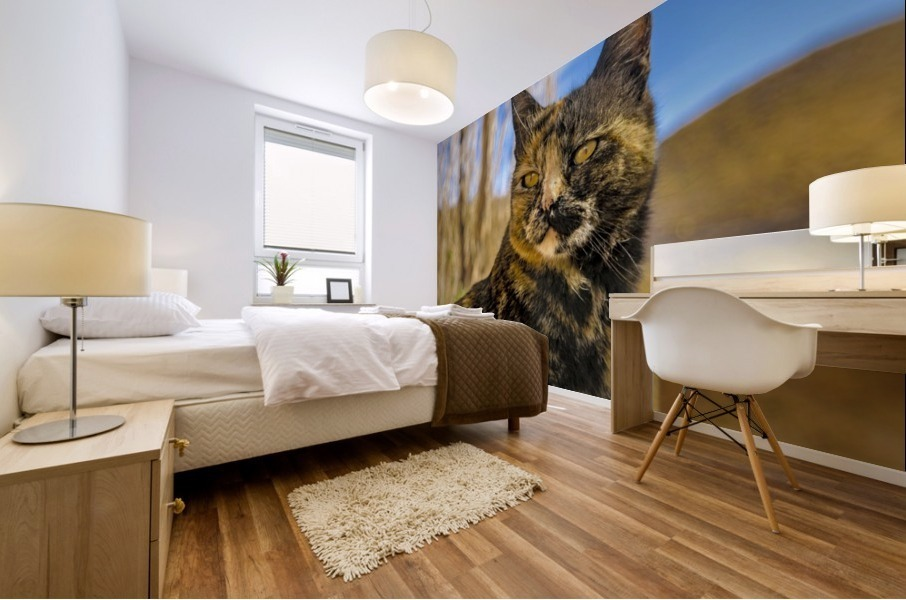 Adult Wild Cat Sitting and Watching Mural print