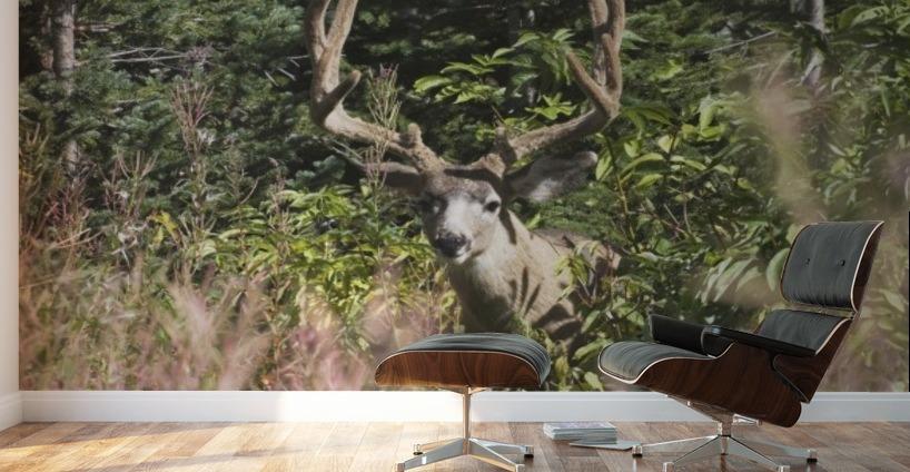 Waterton National Park Alberta Canada Deer In A Mountain Meadow