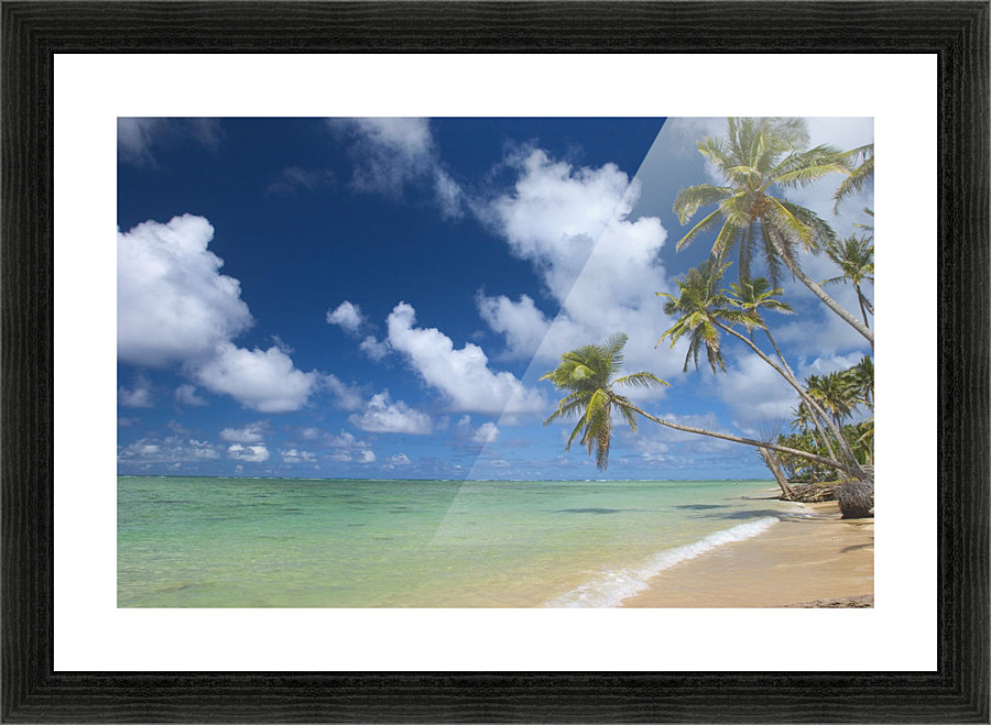 hawaii palm tree leaning over beach polarized sky turquoise ocean