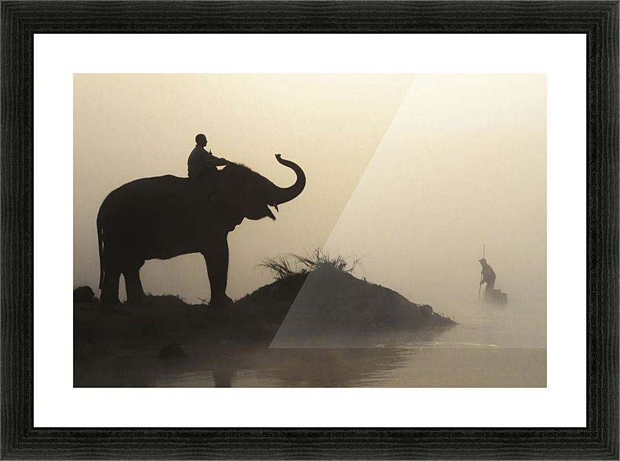 An Elephant With Its Mahout Stand At The Edge Of The Rapti River ...