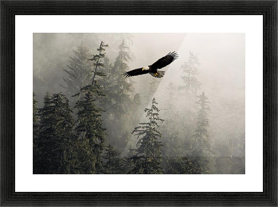 Stock Image Of Bald Eagle Soaring California Tulelake Lower Klamath National Wildlife