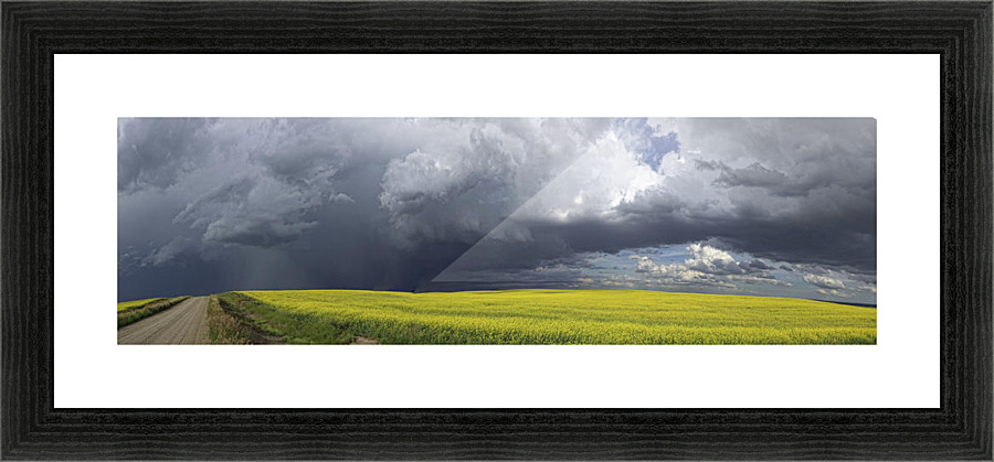 Panoramic of storm clouds gather over a sunlit canola field and ...
