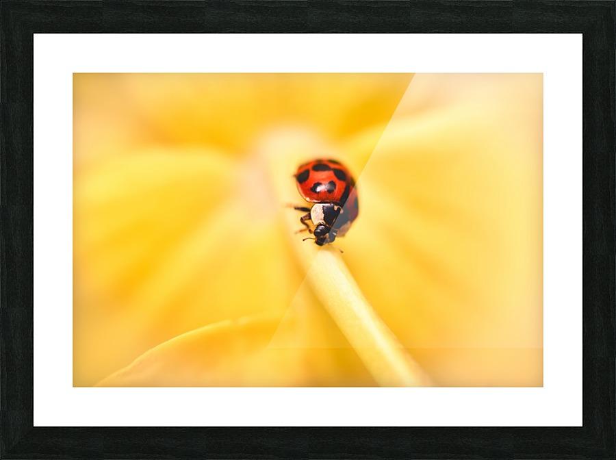 Ladybird Vincent Naze Canvas