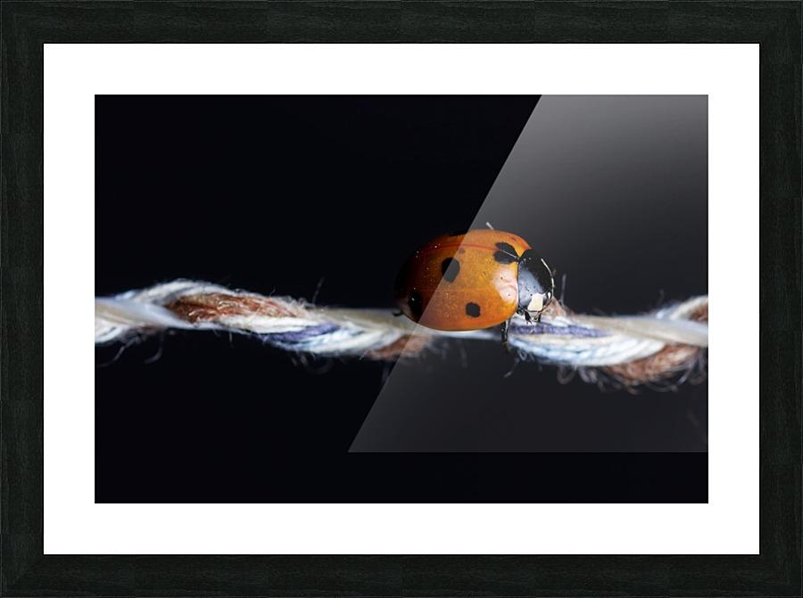 Ladybug Besa Art Canvas