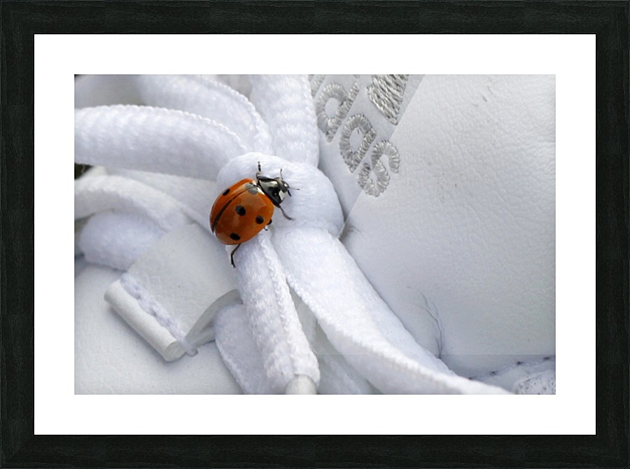 Ladybug Maria Virginia Castro Canvas