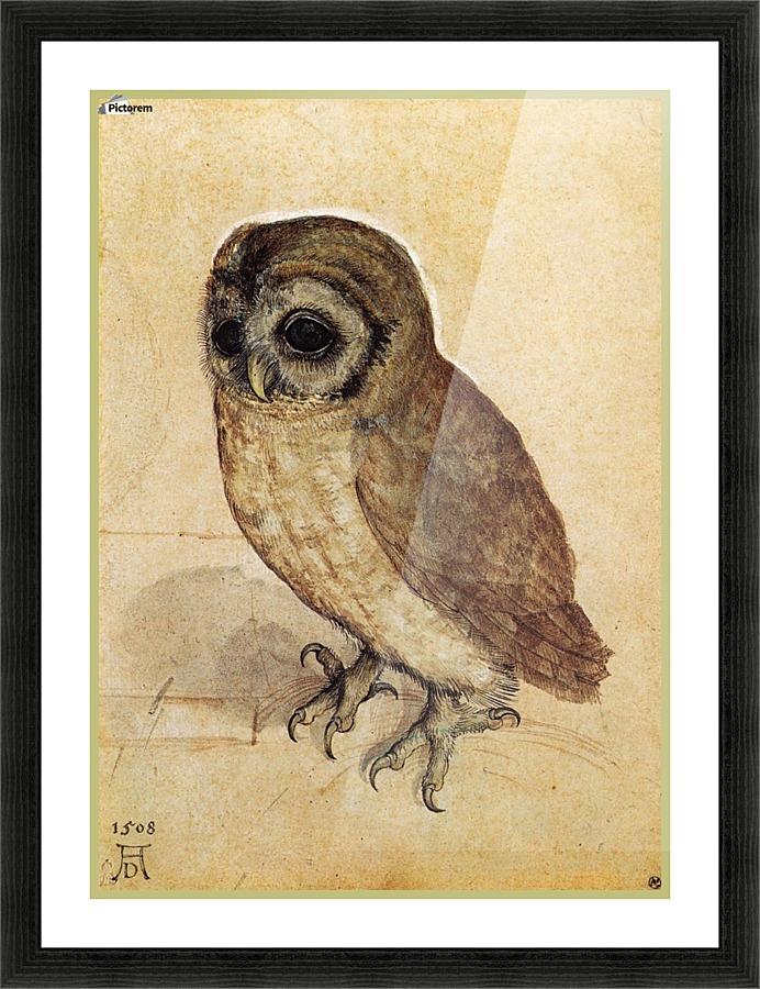 Little owl - Albrecht Durer Canvas
