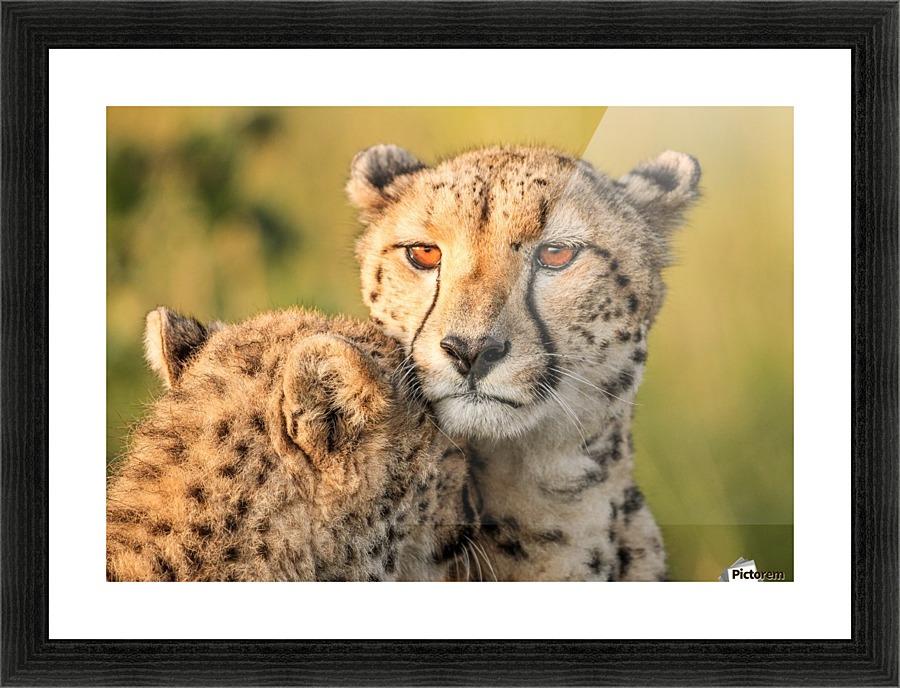 Cheetah eyes - 1x Canvas