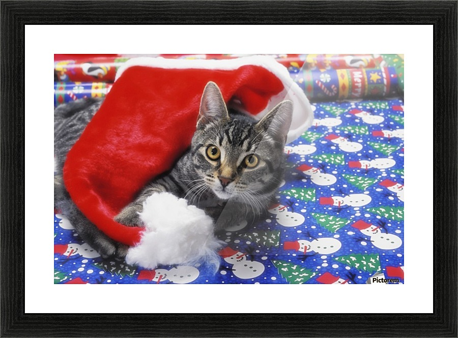 Grey Tabby Cat With Santa Claus Hat Lying On Christmas Gift Wrap