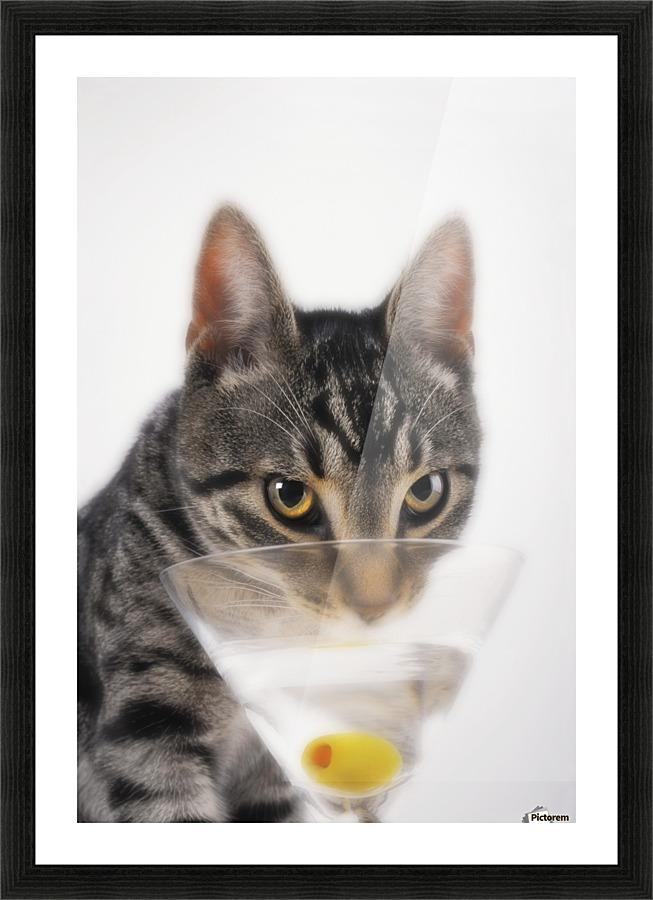 Grey Tabby Cat Drinking Martini Vancouver British Columbia