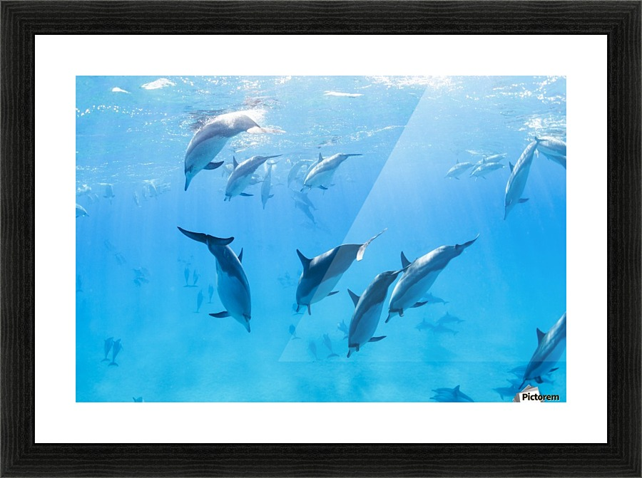 Dolphins Swimming in the Ocean, Amazing Underwater View ...