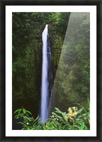 Hawaii, Big Island, Akaka Falls, Tropical Flowers Blooming In Foreground. Picture Frame print