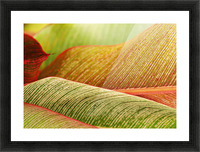 Indonesia, Bali, Close-Up Of Tropical Plants, Leaves Picture Frame print