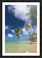 Hawaii, Palm Trees Lean Over Beach, Calm Turquoise Ocean, Dramatic Sky. Picture Frame print