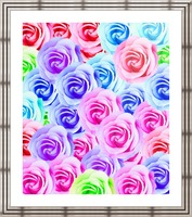 closeup colorful rose texture background in pink purple blue green Picture Frame print