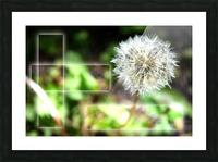 Fragile et résistante Picture Frame print