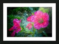 Fleurs d'artifices Picture Frame print