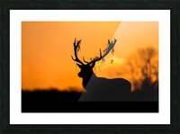Red Deer Stag Silhouette Picture Frame print