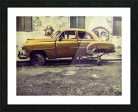 Old car cat Picture Frame print