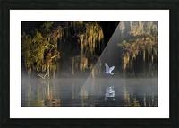 Egret Picture Frame print