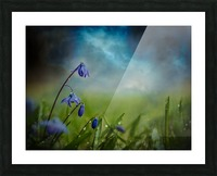 After the spring rain Picture Frame print
