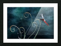 Red Dragonfly Picture Frame print