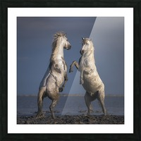 Confrontation Picture Frame print