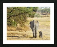 An African Elephant with it's young; Tanzania Picture Frame print