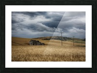 Old, rustic wooden house in the middle of a golden field under a stormy sky; Palouse, Washington, United States of America Picture Frame print
