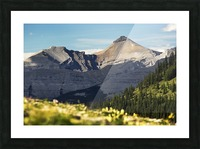 Mountain range with wildflowers on hillside in the foreground and blue sky; Bragg Creek, Alberta, Canada Picture Frame print