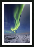 The aurora borealis shines above an ATV trail covered in snow, south of Delta Junction; Alaska, United States of America Picture Frame print
