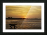 A dog runs across a wet beach with the golden sun setting in an orange sky along the coast and Bamburgh Castle in the distance; Bamburgh, Northumberland, England Picture Frame print