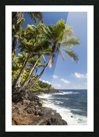 Palm trees along the Puna coastline, near Kalapana; Island of Hawaii, Hawaii, United States of America Picture Frame print