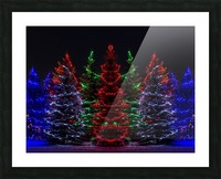 Colourful Christmas lights around several evergreen trees; Calgary, Alberta, Canada Picture Frame print