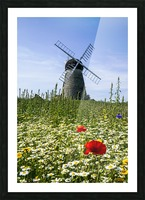 A windmill against a blue sky and cloud with a field of wildflowers in the foreground; Whitburn, Tyne and Wear, England Picture Frame print