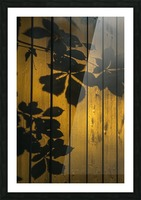 Shadows of tree branches and leaves cast on a wooden fence; Gateshead, Tyne and Wear, England Picture Frame print